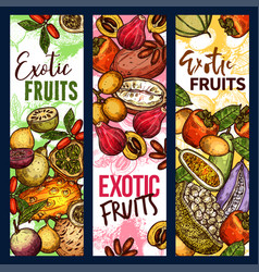 exotic tropical fruits organic harvest sketch vector image