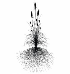 grass with roots vector image