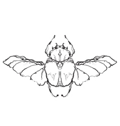 Hand drawn flies insect vector
