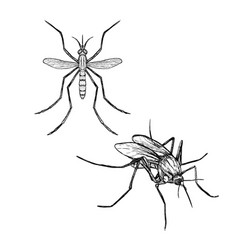 hand drawn set of mosquito realistic sketches vector image