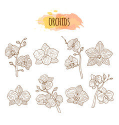 Orchid flowers hand drawn set vector