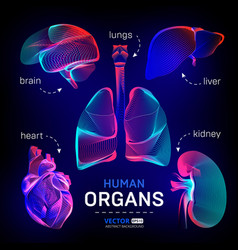 set different human inner organs contour or vector image