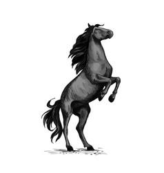 Wild horse racer rearing sketch vector