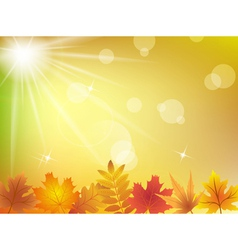 Autumn leaves in sunlight background vector image