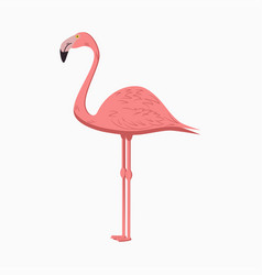 flamingo pink exotic tropical bird vector image