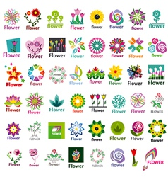 large collection floral logos vector image