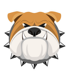 Angry bulldog face in metal collar vector