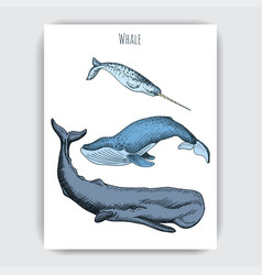 card with whale colorful with vector image