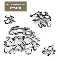 Mushrooms oyster vector