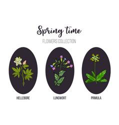 Spring flowers set primula lungwort hellebore vector
