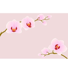 Tender orchid vector image