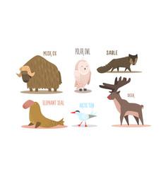 Collection arctic animals with names polar owl vector