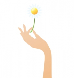 hand with daisy vector image vector image