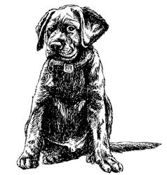 Labrador Retriever vector image