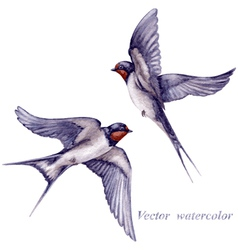 Swallows watercolor vector