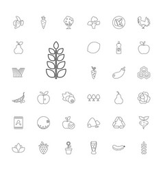 33 organic icons vector