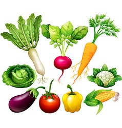 All kind of vegetables vector