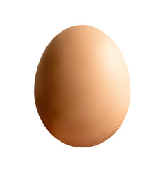 brown egg isolated vector image