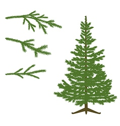Fir tree and Branches vector image vector image