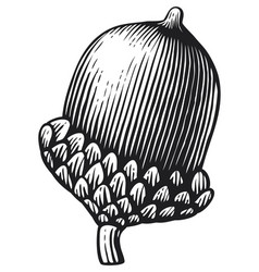 acorn vintage engraved vector image vector image
