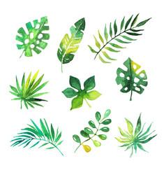 tropical leaves set jungle trees botanical vector image
