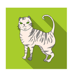 British shorthair icon in flat style isolated on vector