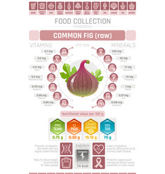 Food infographics poster fig fruit vector