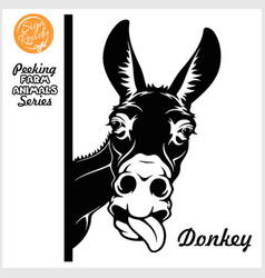 peeking donkey - donkey stuck out his tongue vector image