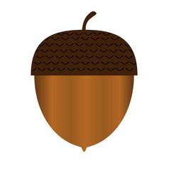 acorn vector image vector image