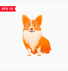 Cute corgi sits on an isolated layer vector