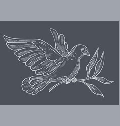 Dove or pigeon with olive branch isolated sketch vector