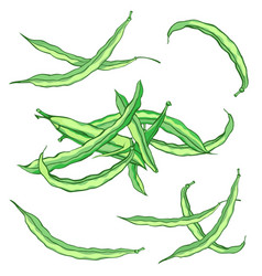Green string beans set without gradients vector