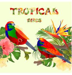 seamless border tropical birds euplectes vector image