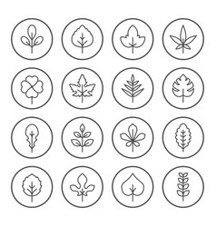 set round line icons of leaf vector image