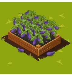 Vegetable Garden Box with Eggplant Set 5 vector image