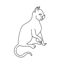 American shorthair icon in outline style isolated vector