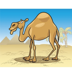 cartoon illustration of dromedary camel on desert vector image