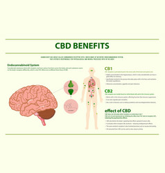 Cbd benefits human horizontal infographic vector