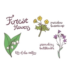 Forest flowers set vector image