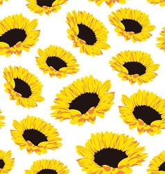 Seamless pattern of sunflowers vector