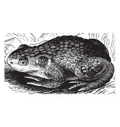 Toad vintage vector