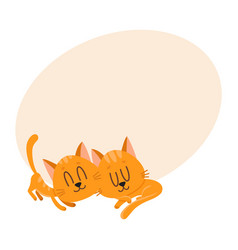two cute and funnylittle cat kitten characters vector image vector image