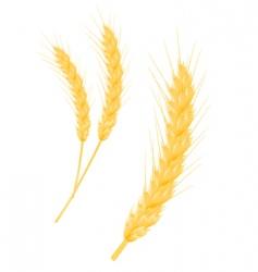 wheat ear vector image vector image