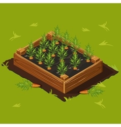 Vegetable Garden Box with Carrots Set 1 vector image vector image