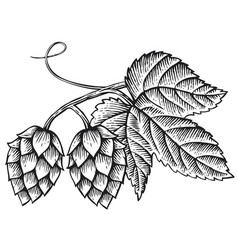 Hops icon with leaves vintage engraved vector