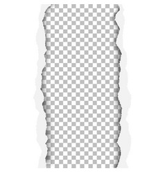 ragged vertical hole in paper sheet vector image