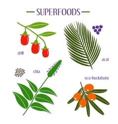 Set of superfood Goji acai chia sea-buckthorn vector