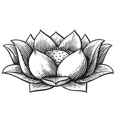 lotus flower vintage engraved vector image
