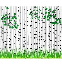 Birch trees and grass background vector image vector image