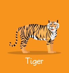 Fierce tiger in asia design on orange vector